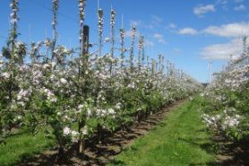 Spring Future Orchards® Walk – Orange