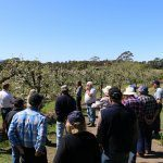 Sharing ideas to climate change-proof orchards