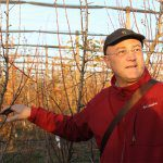 Pear Masterclass focusses on orchard management