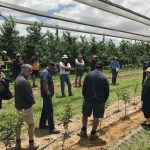 Rootstock choices offer powerful productivity tool