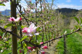 Spring Future Orchards® Walk – Tasmania