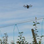 Drones deployed to assess nitrogen needs of pears