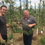 Focus Orchard Trial Update January 2017
