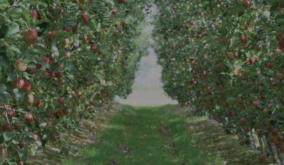 Future Orchards®