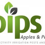 Nitrogen management in red-blushed pears