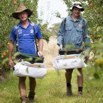 Pedestrian orchards better for workers and growers