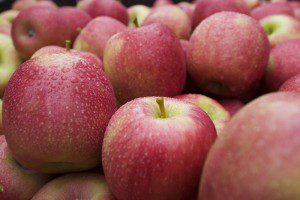 Fruit Growers Tasmania 30th Annual Conference