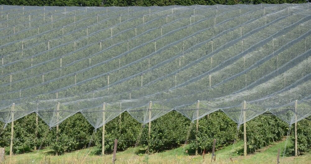 netting economic barriers costs