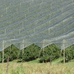 Beyond the cost barrier: Netting delivers growth