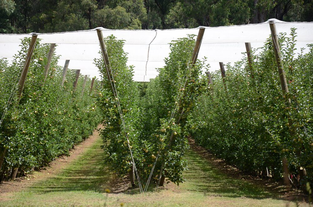 victorian orchard netting cost barriers