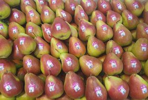 Australian pears bound for Thailand