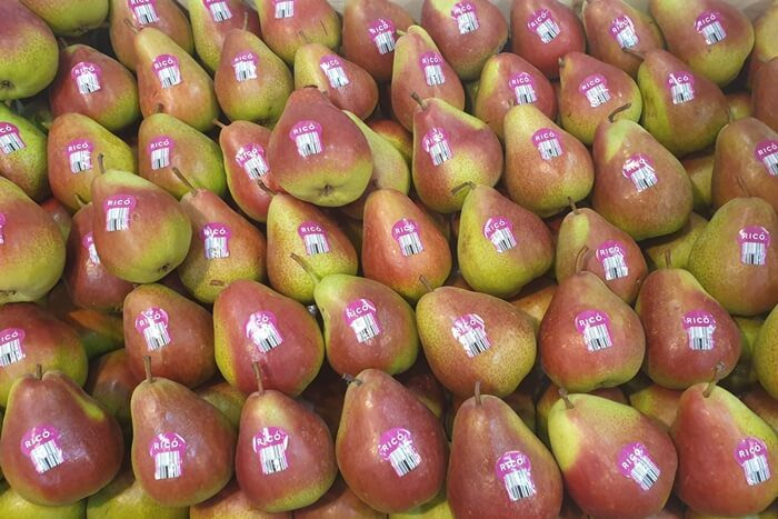 pear export thailand rico