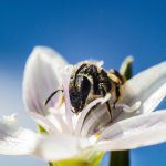 What's all the buzz about pollination?