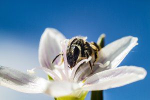 bee bees pollination buzz