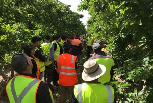 Key messages from Spring Future Orchards walks