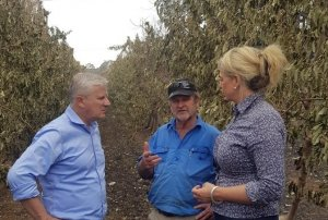 Federal Government ministers visit Batlow as growers assess bushfire damage