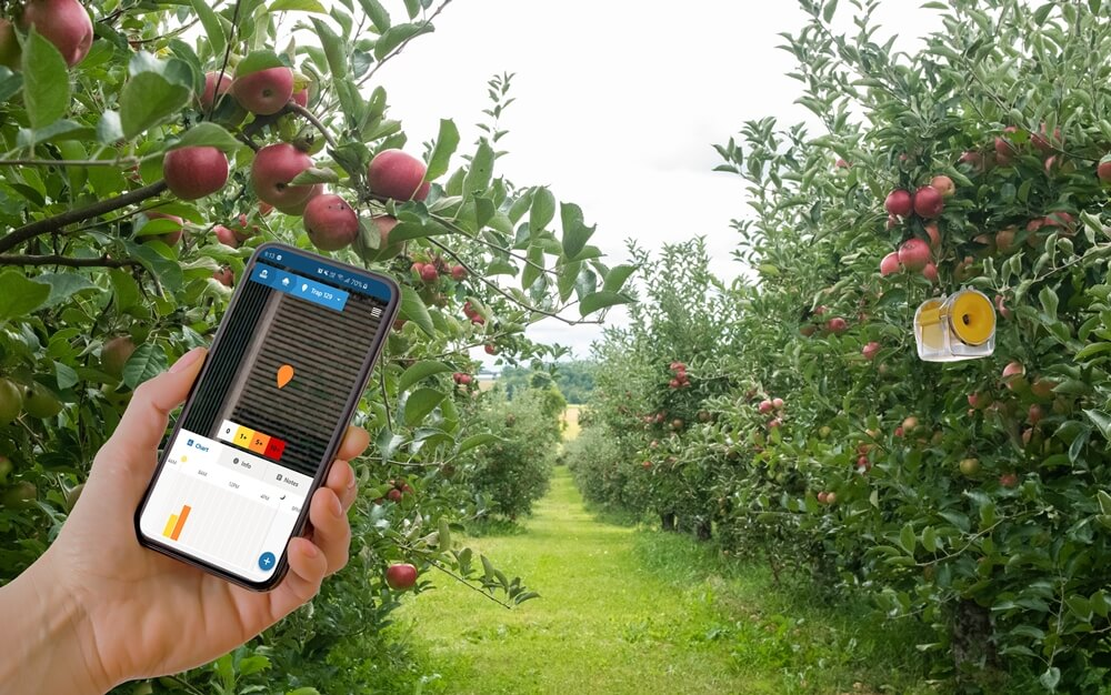 fruit fly growers mobile app management rapidaim