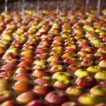 Growers push on with harvest as food supply chain stands strong