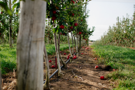 Winter Future Orchards® Walk – Goulburn Valley