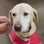 Pawsome detector dogs keeping Australia biosecure