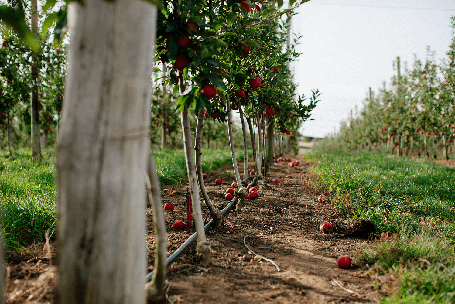 Winter Future Orchards® Walk – SA