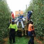 Harvest labour – keeping up with the changing options