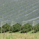 National Netting Program progressing
