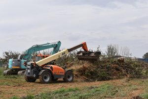 Tree removal program helping to remove QFF in Goulburn Valley