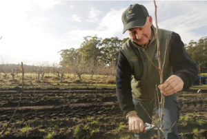 My Harvest: Scott Price, APAL director and Production Manager at R & R Smith, Huon Valley, Tasmania