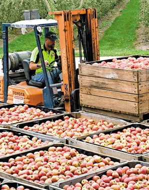 Online training for Australian apple and pear exporters
