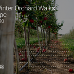 Future Orchards® Virtual Winter Orchard Walk Stanthorpe
