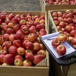 Orchard Business Analysis – update