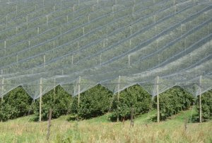 South Australian growers to receive netting funding