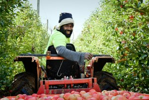 Seasonal workers redefine 'unskilled'