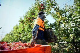 2021 Autumn Future Orchards® Walk – Southern Victoria