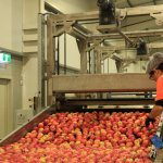 Building Food Safety Management Capacity