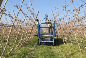 Keeping it clean when pruning