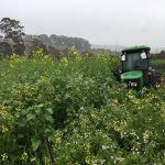 Trial shows good growth from old apple ground treatments