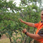 Variety of current grants available to boost apple and pear growers
