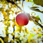 US apple import review moves into next phase