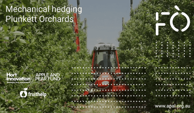 Mechanical hedging at Plunkett Orchards