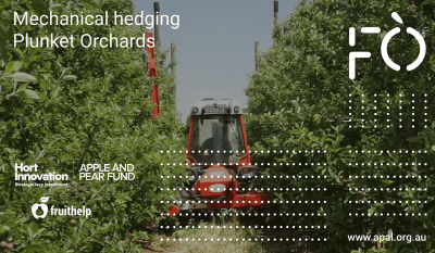 Mechanical hedging at Plunket Orchards