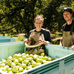 Berry harvest reveals labour challenges and advice