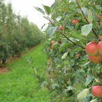 Seeking EOIs for Future Orchards advisory group