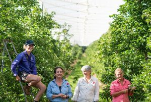 Harvest labour: thinking outside the box