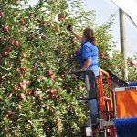 Harvest progress confirms future directions for automation and labour