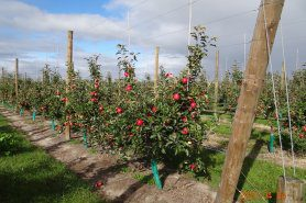 2021 Autumn Future Orchards® Walk – Tasmania