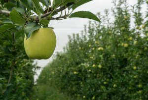 Local orchards welcome growers onsite for autumn Future Orchards walks