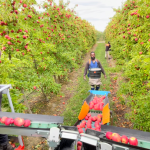 Focus Orchards – Labour experiences and thoughts for the future