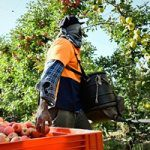 Protecting orchard businesses